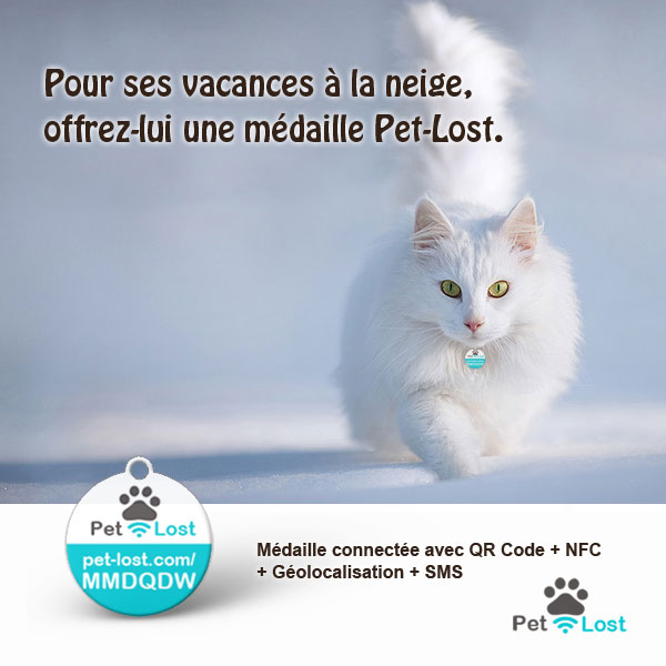 Pet-Lost